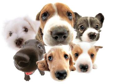Dicas valiosas de conservação da casa para quem tem cãezinhos de estimação