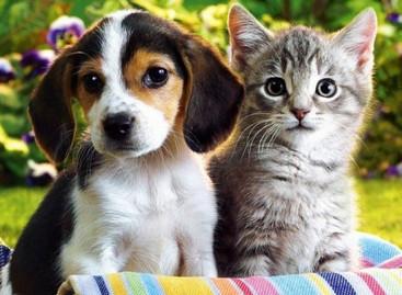 Estudos apontam todos os benefícios de se ter um pet