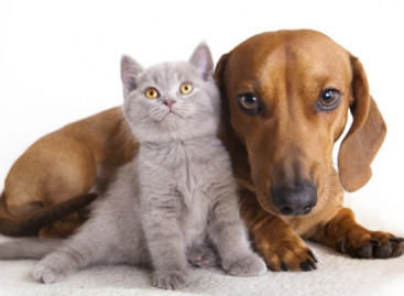 Conheça os benefícios da castração dos pets