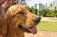 Seis dicas para cuidar do seu pet no verão