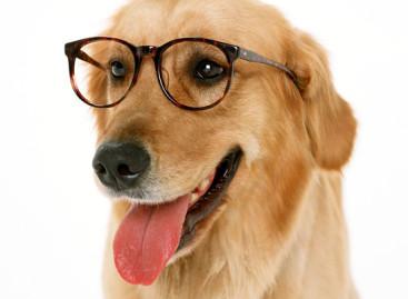 Principais doenças oculares nos animais