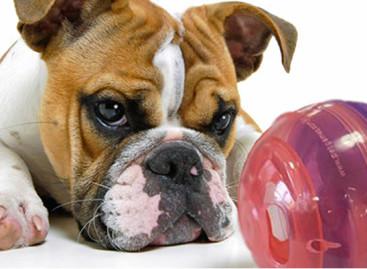 Brinquedos que estimulam cães e gatos