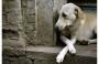 Maus-tratos e abandono de animais é crime, saiba como denunciar