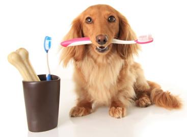 Escovação de dentes em animais é garantia de uma vida saudável