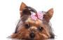 Entenda a personalidade forte dos pets