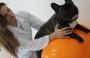 Dicas de fisioterapia para os animais