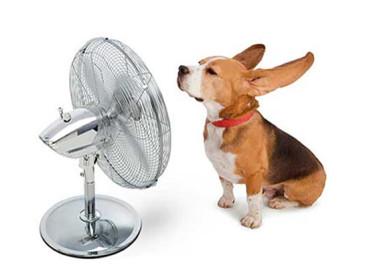 Dicas para garantir o bem estar dos pets durante as altas temperaturas