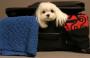 Viagem com o pet exige preparação minuciosa
