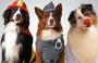 Carnaval: dicas de cuidados para o seu pet