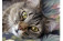 Como os gatos demonstram afeto?