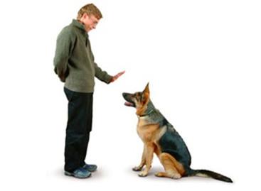 Confira 5 dicas para acalmar o seu pet