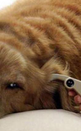 Diabetes em cães: saiba mais sobre cuidados
