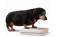 Especialista alertam sobre os problemas da obesidade para a saúde de cães e gatos