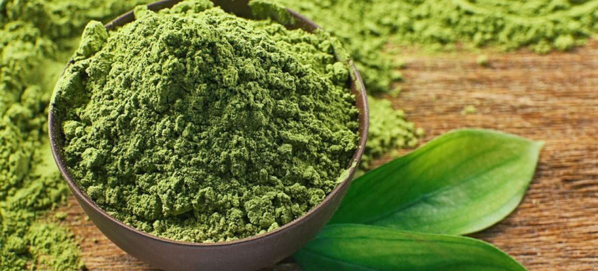 Matcha: diversos benefícios em um único chá
