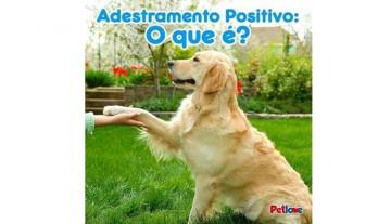 Adestramento positivo: não envolve punições para os pets