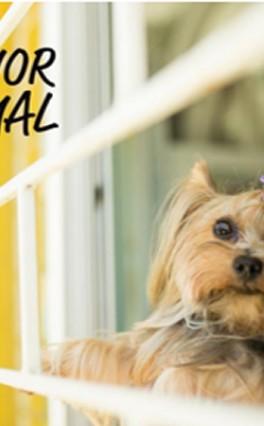 Como diagnosticar e curar a depressão em pets