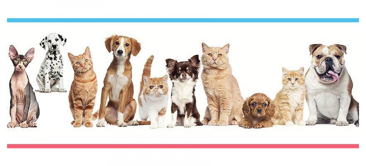 Você sabia que seu pet pode ter hepatite?